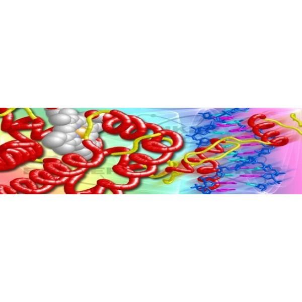 Analiza Proteinelor